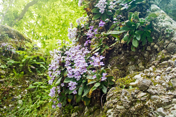 Влияние на природата върху духа