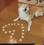 """Как кучето казва: """"Обичам те!"""""""