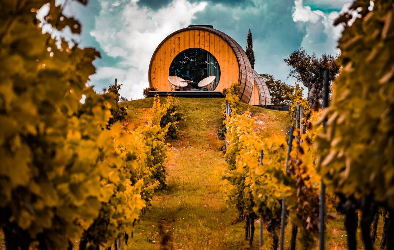 Домашното винопроизводство в България - интересни факти, особености, съвети и препоръки.