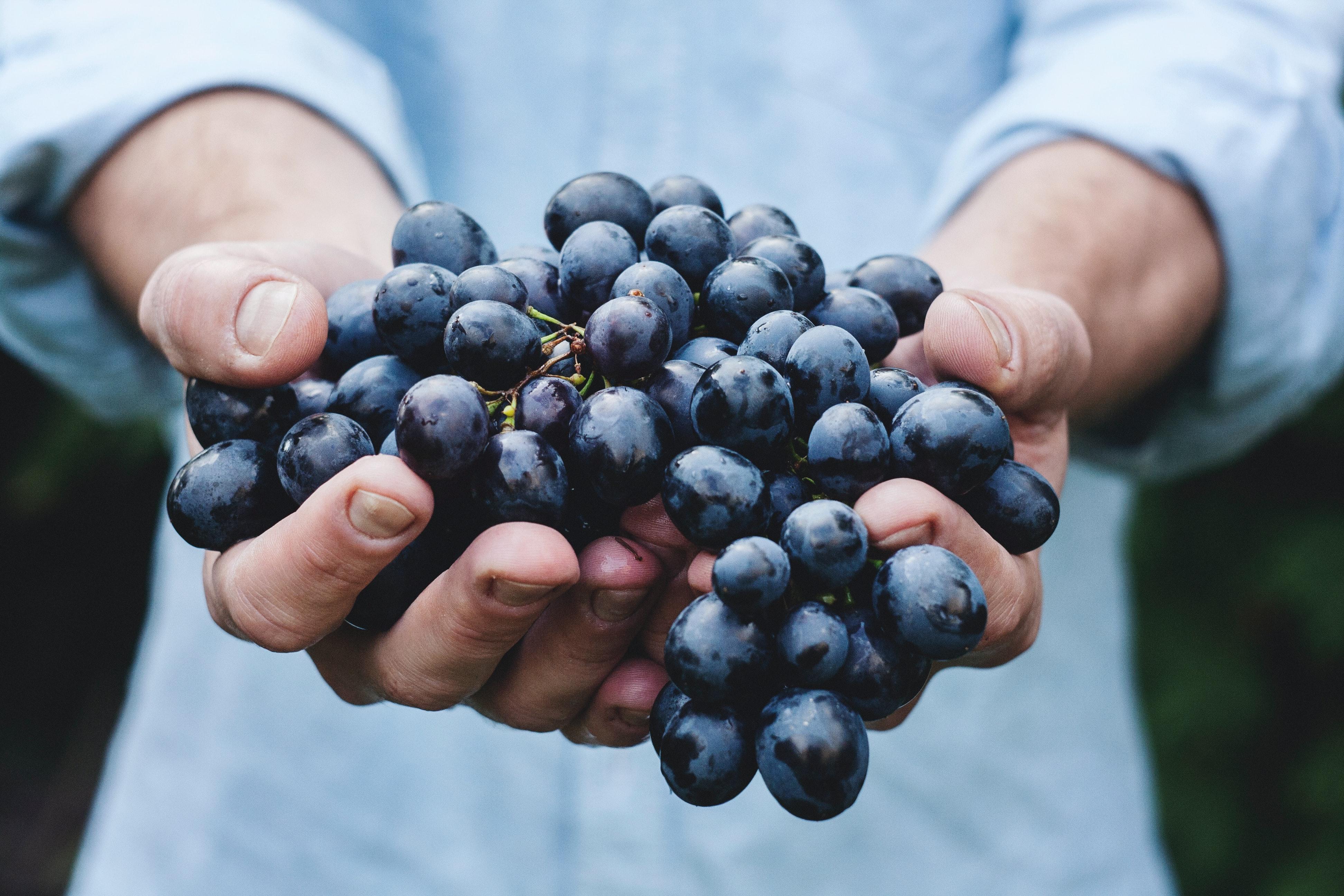 снимка на гроздобер