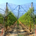Мрежа против градушка - 35 g/m², различна ширина