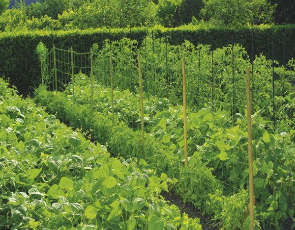 Мрежа за краставици Trellinet - различни размери