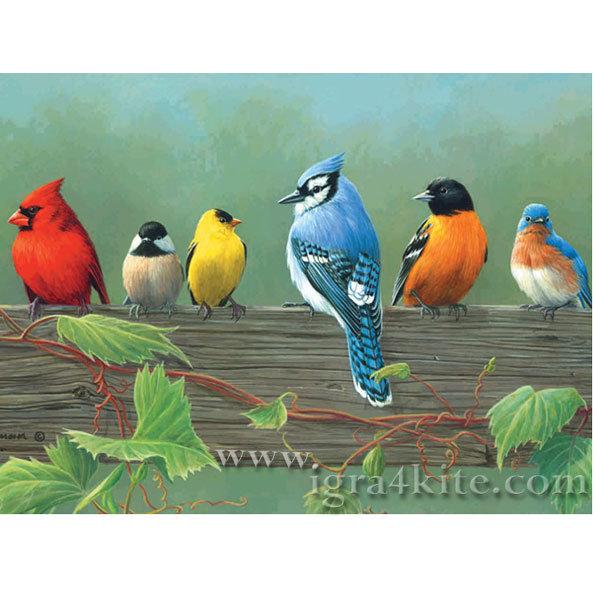 Artist collection - Рисуване с акрилни бои Красиви птици acl5