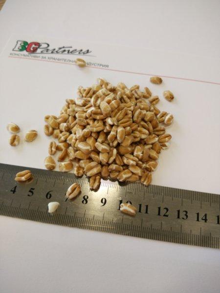 Разпукани зърна от ръж