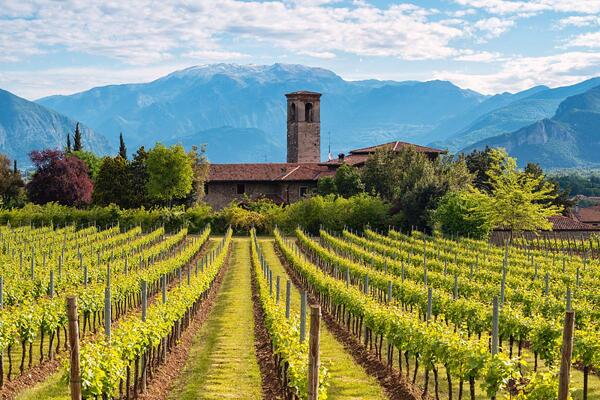 Франчакорта и Bellavista Winery