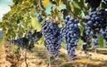 Тоскана - само за ценители