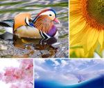 Как цветовете се отразяват на настроението?