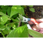 Лозарски ножици Silky, Okatsune 103