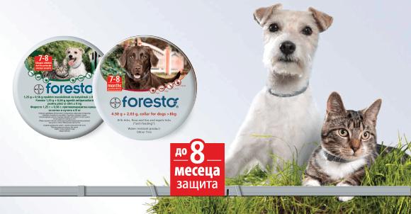 Bayer Foresto S - противопаразитна каишка 38 см
