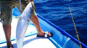 Морски риболов 1 - риба