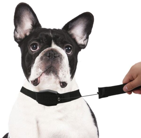Нашийник за куче с вграден повод - Lucky Leash