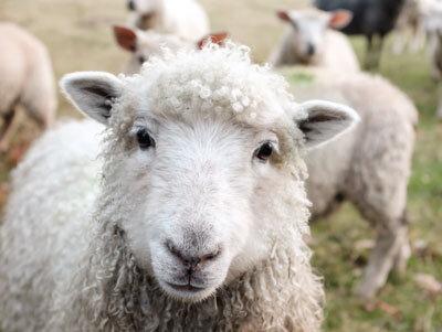 Биоциди-Специална грижа за животните