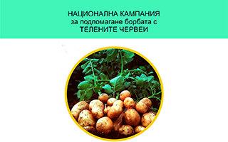 Картофопроизводителите получават близо 2 милиона лева за борба с телените червеи