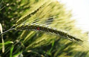 Земеделски календар: ЮЛИ