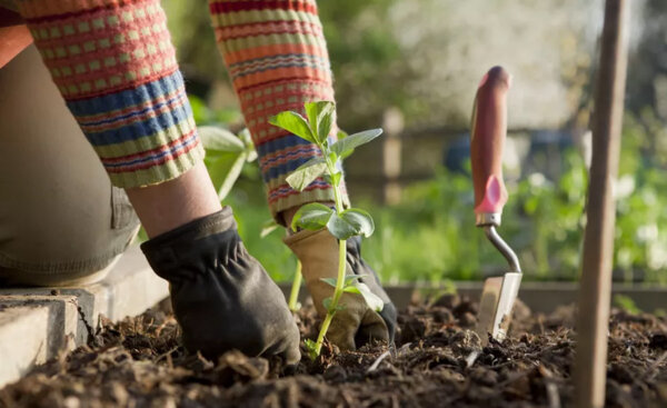 Растителна защита от ново поколение с Ваксина при всички растения