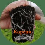 Спазване на технологичните схеми инсектицид, фунгицид, силни корени