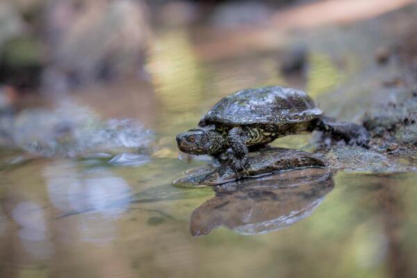 """Гости на Био хотел """"Моравско село"""" спасиха костенурка от защитен вид"""