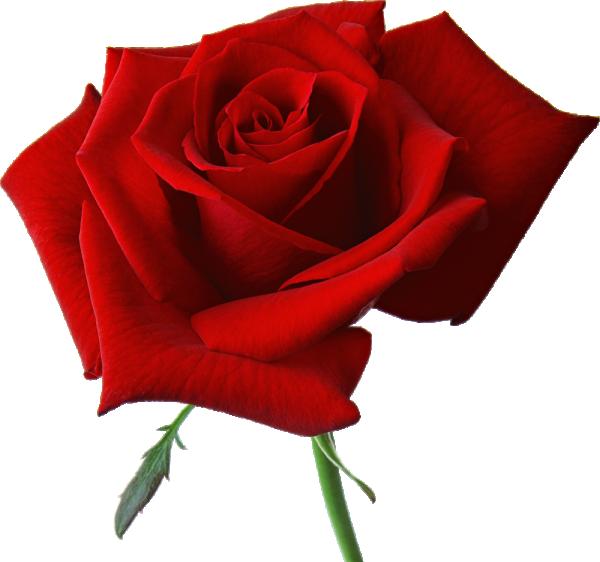 Букет от цветя