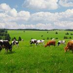 Маклер Комерс: Млечните продукти, които всички обичаме!