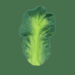 Oli&Carol Гризалка Candall the Kale