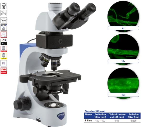 Тринокулярен, флуорисцентен микроскоп, модел B-383LD