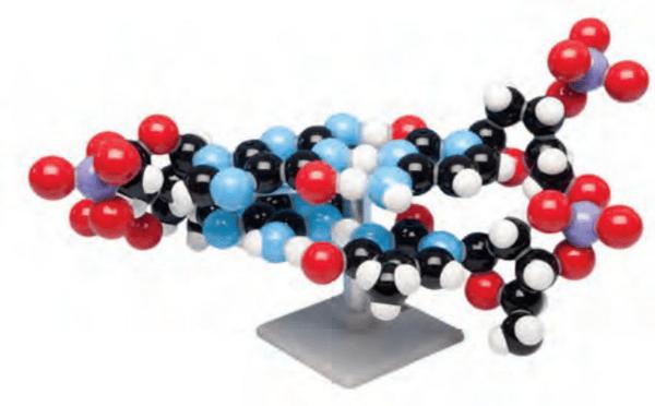 ДНК модел за сглобяване, MKS- 122/2