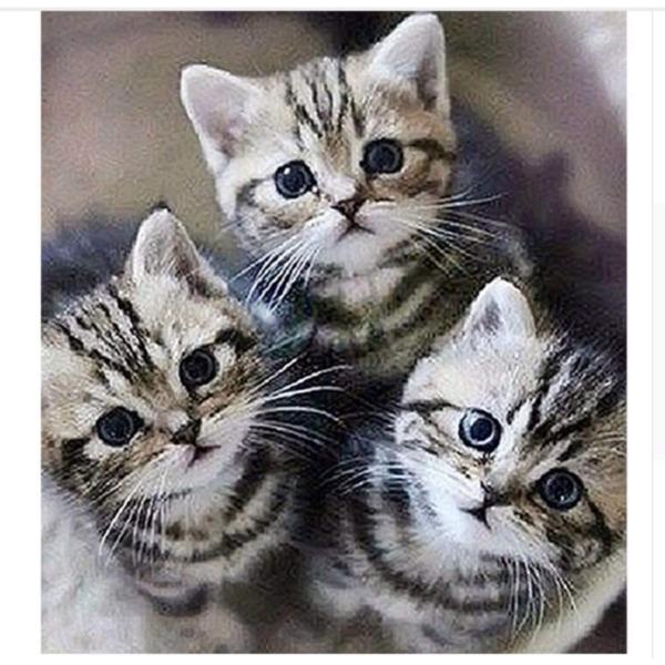 """Диамантен Гоблен """"Трите Котенца"""" - 30 x 40 см, Кръгли мъниста"""