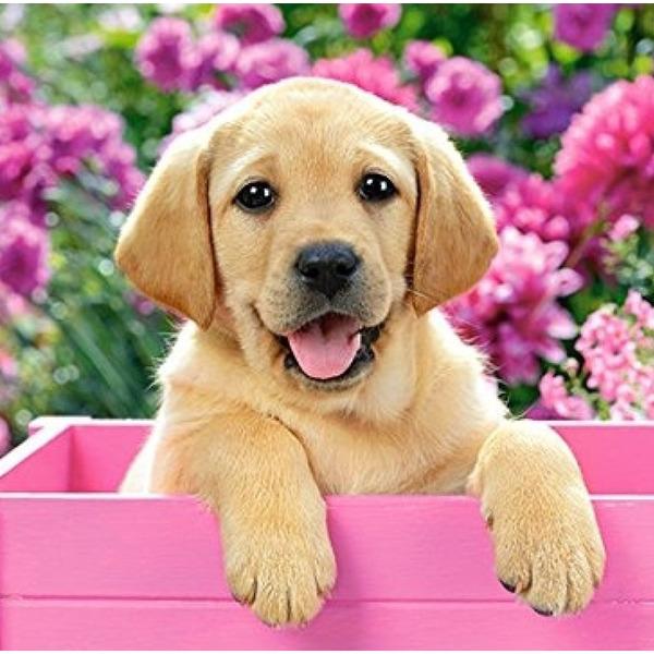 """Диамантен Гоблен """"Кученце с розови цветя"""" - 40 x 40 см, Кръгли мъниста"""