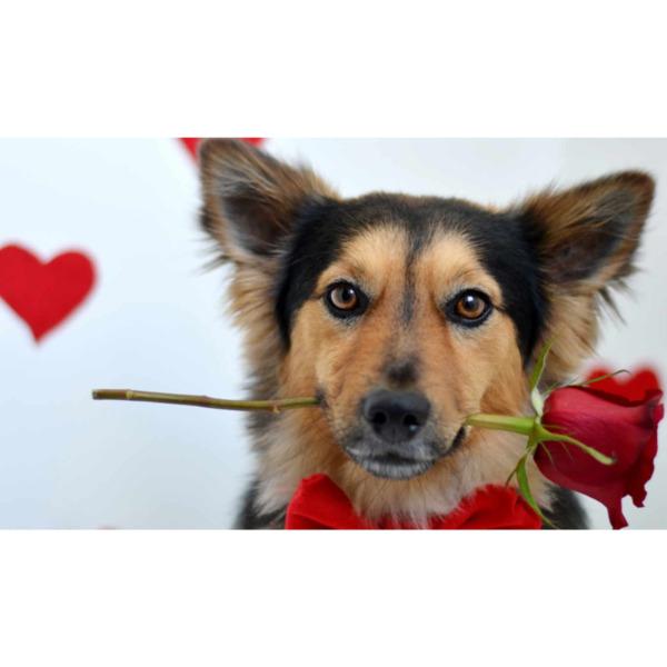 """Диамантен Гоблен """"Куче, подаряващо роза"""" - 35 x 55 см, Кръгли мъниста"""