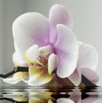 Диамантен гоблен Орхидея 40 х 40 см