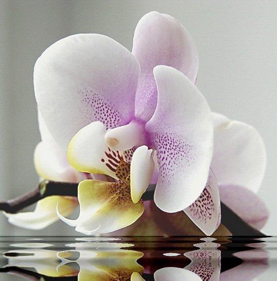 """Диамантен Гоблен """"Орхидея"""" - 40 x 40 см, Кръгли мъниста"""