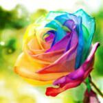 Диамантен гоблен Шарена роза 40 х 40 см
