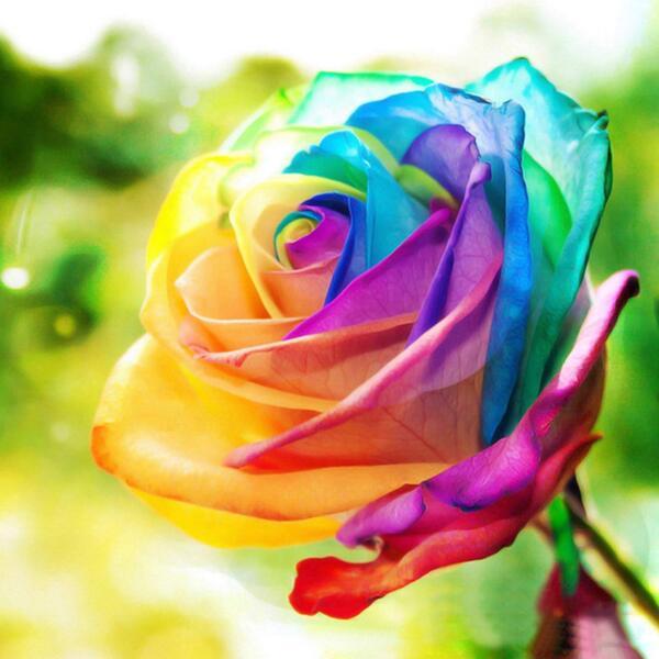 """Елмазен Гоблен """"Шарена роза"""" - 40 x 40 см, Квадратни мъниста"""