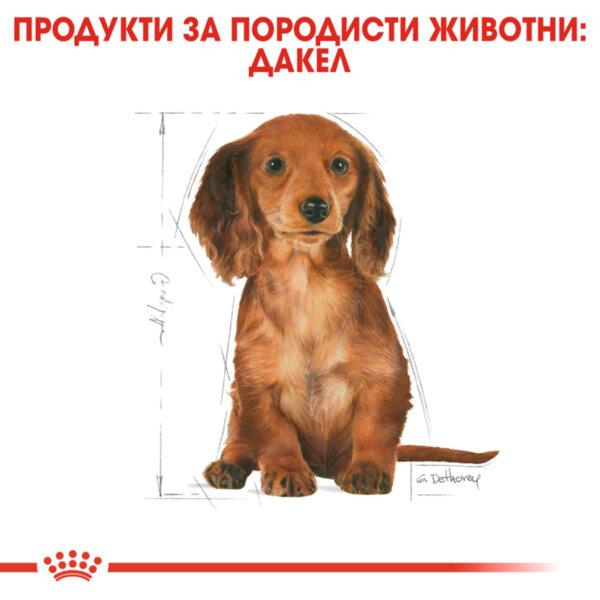 ROYAL CANIN® Dachshund Puppy 1.5kg
