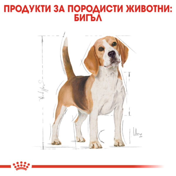 ROYAL CANIN® Beagle Adult 3kg
