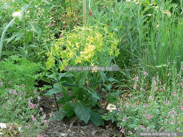 Поддържащи шини за цветя CHELSEA