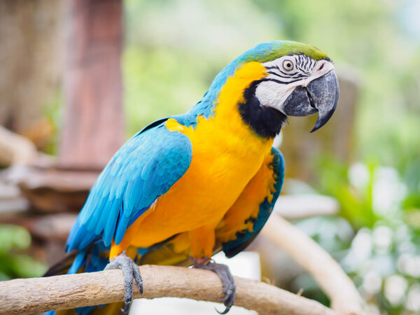 Храна за папагали и птици, клетки, лакомства и грижа за птици