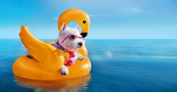 С куче на море