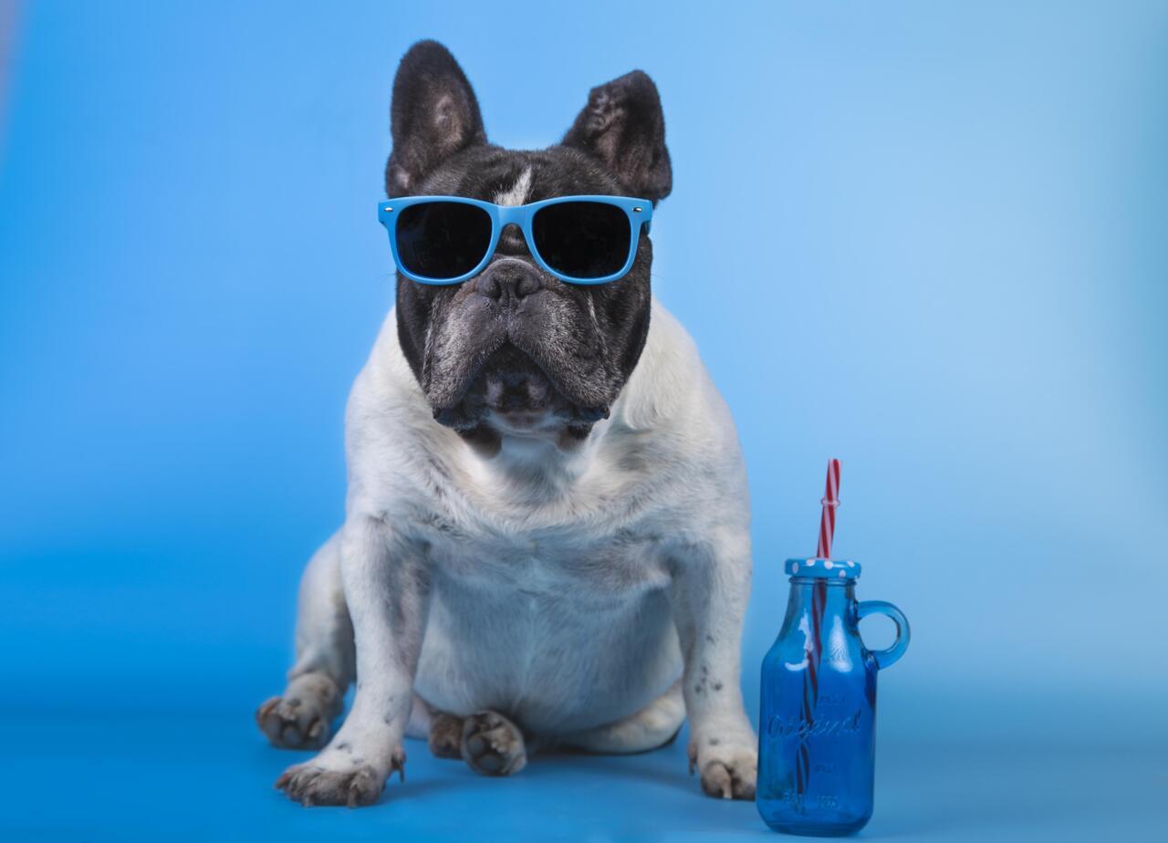 Как да се грижим за кучето през лятото