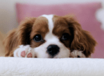 Популярни породи малки кучета и техният характер