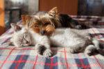 Сънуват ли кучетата и котките?
