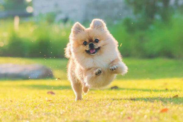 Грижа за козината на кучето -  как да я поддържаме здрава и красива?