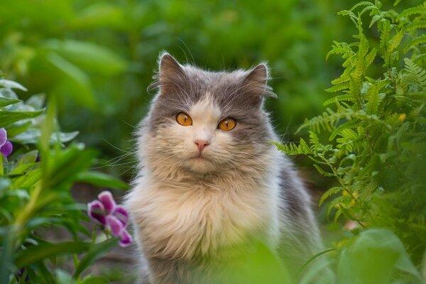 Грижи за козината на котката - как да я поддържаме мека и пухкава?