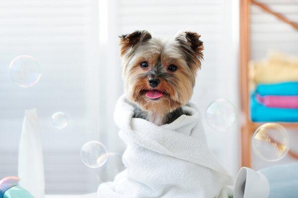 Къпане на кучета и котки