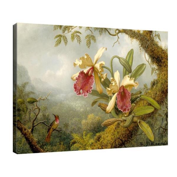 Мартин Хийд - Орхидеи и колибри №11618