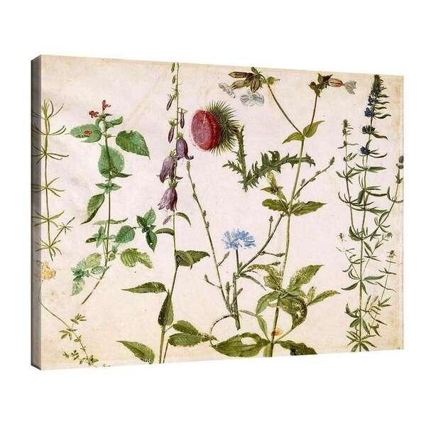 Албрехт Дюрер - Скици с диви цветя №8092
