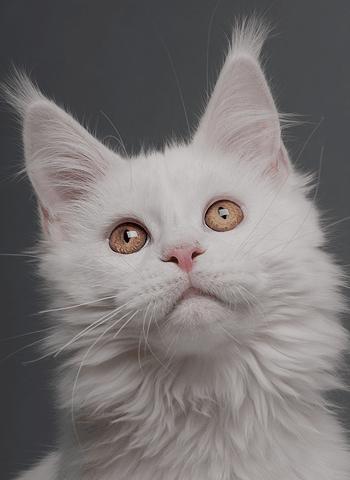 За котката