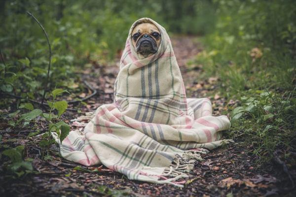 Пет странни неща, които кучетата правят