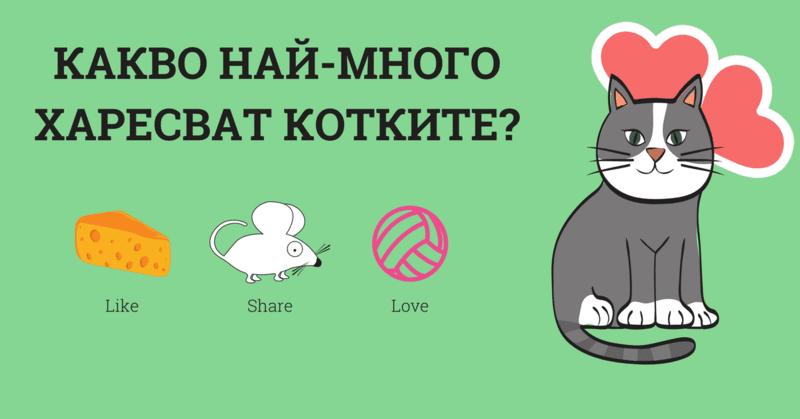 Девет неща, които котките харесват най-много