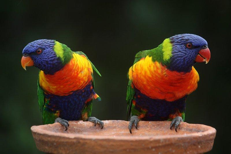 Какви играчки за птици да купим?